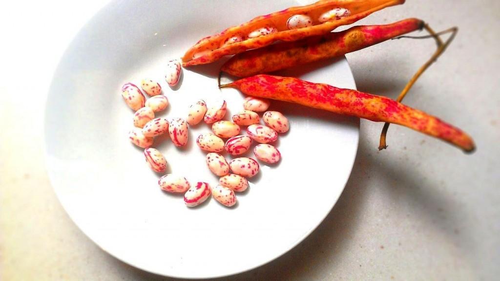 barlotti_beans-tiltshift